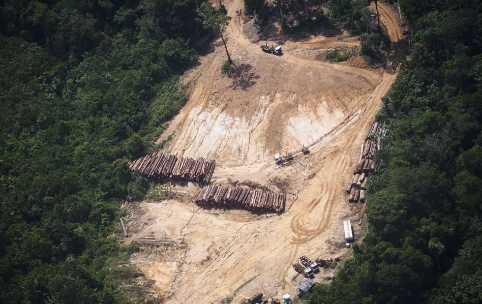 Tala de árboles en el estado de Pará (Brasil), en la Amazonía.