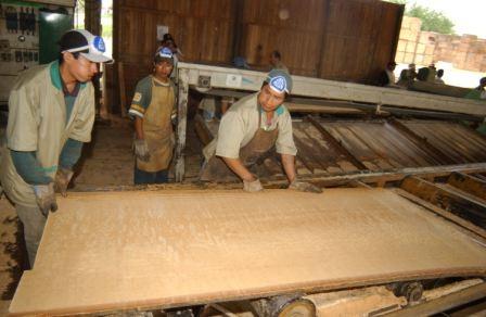 Industria-forestal-se-declara-en-quiebra-total
