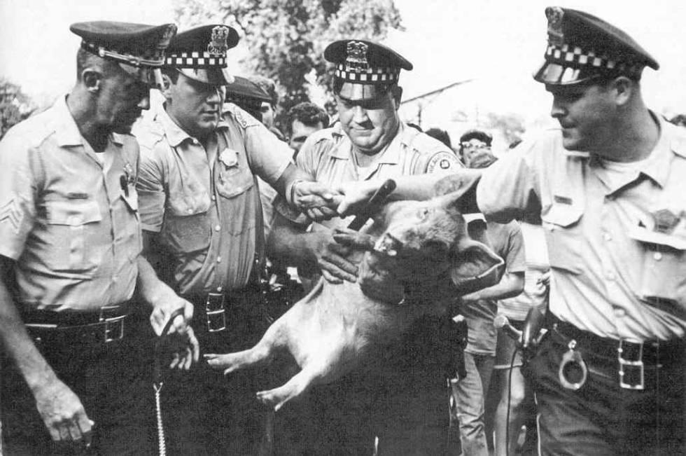 Política animal: cuando las mascotas se presentan a las elecciones