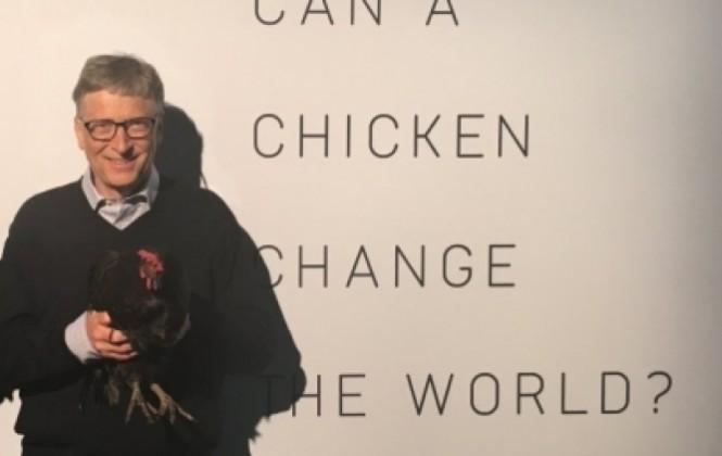 Bolivia es uno de los países que recibirá gallinas donadas por Bill Gates