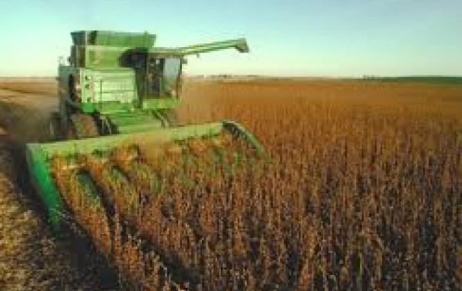 Foro informará avances sobre cultivos genéticamente modificados