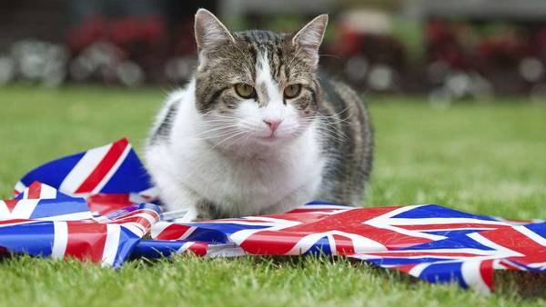 Larry el gato de Downing Street. / Reuters