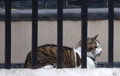 """Larry, el gato """"oficial"""" de Downing Street. / AFP"""
