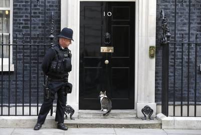 Larry, en la célebre puerta del 10 de Downing street./ Reuters