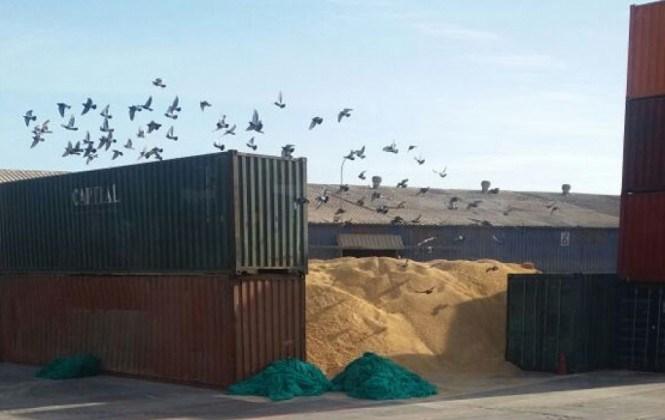 La delegación boliviana logra ingresar al puerto de Arica tras seis horas de espera