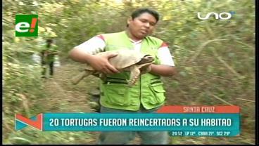 Sueltan 20 tortugas con chip de monitoreo al Curichi La Madre