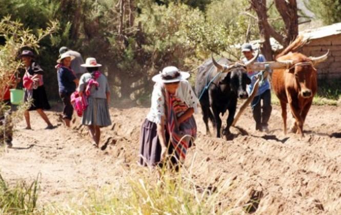 Fundación Tierra: Campesinos e indígenas son víctimas de las empresas transnacionales del agro