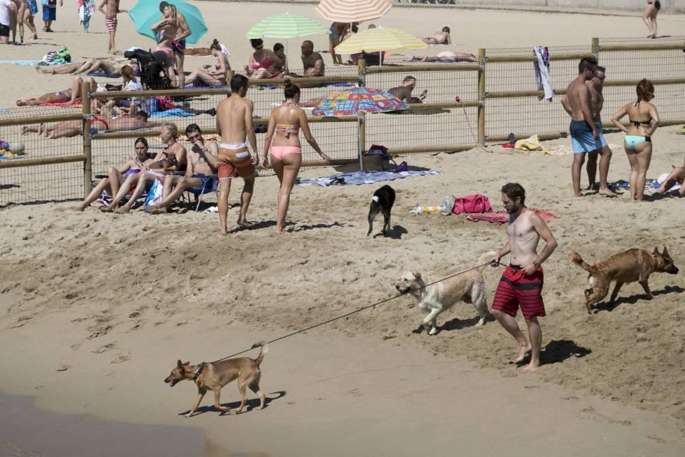 Personas con sus perros en una playa de Barcelona.