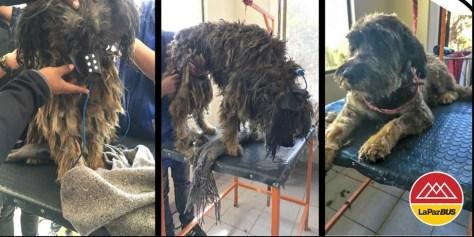 Las imágenes muestran la primera vez que rastas recibió un corte de pelo y un baño
