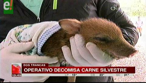 Operativo decomisa carne silvestre y alrededor de 100 animales vivos