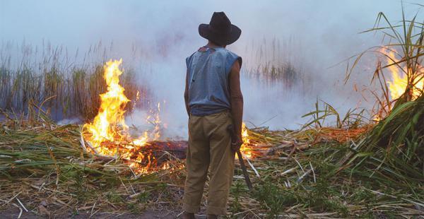 el modelo hace crisis la quema es la única medida que encuentran para deshacerse de los desmontes En Bolivia, 240.000 hectáreas deben arder cada año para ampliar la frontera agrícola