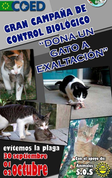 Afiche de la campaña que pretende recoletar gatos. Foto: COE