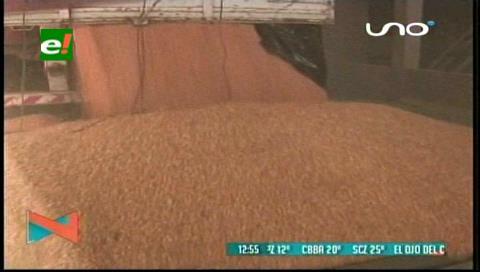 Productores anuncian más importación de maíz