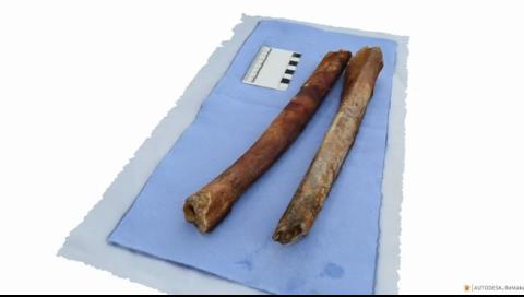 Encuentran un esqueleto en un barco hundido hace 2.000 años