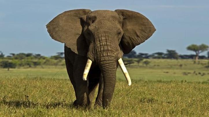 elefante-africano-kz7g-620x349abc