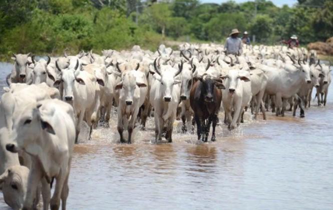 Fegasacruz lamenta que ayuda a ganaderos llegue de forma lenta pese a situación de emergencia
