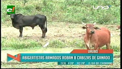 Abigeatistas armados roban ocho cabezas de ganado por el Urubó