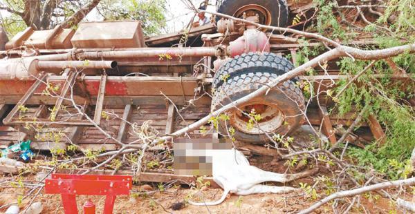 Un camión tuvo fallas mecánicas y volcó. El ganado murió en el lugar