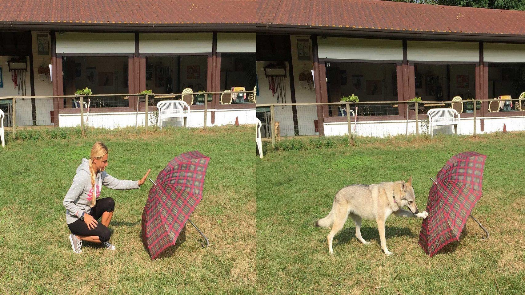 La investigadora prueba su teoría con su perro.