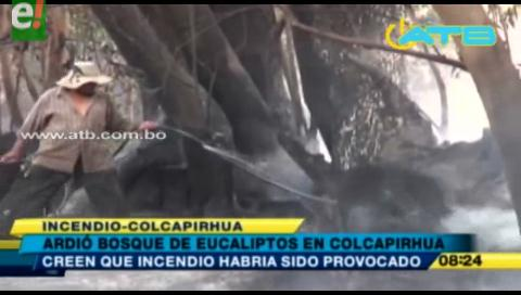 Se incendió un bosque de eucaliptos