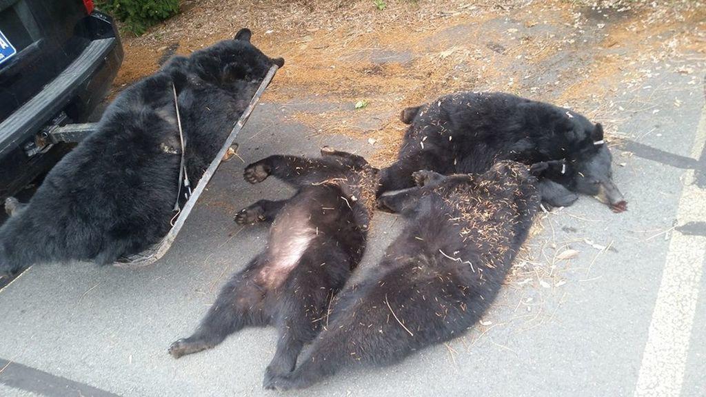 La familia de osos muerta, en la fotografía subida por la policía de Wyoming Oeste.
