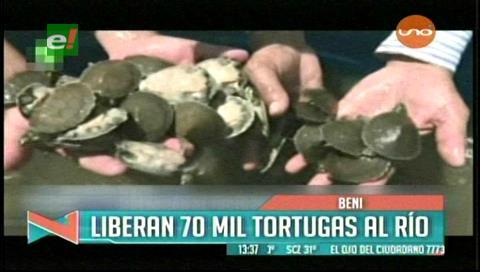 Evo libera más de 70.000 tortugas en el río San Pedro de Beni