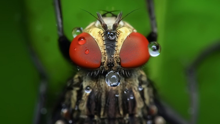 Crean una tecnología genética que podría destruir toda una especie de organismos en la Tierra