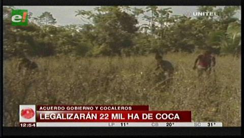 Ley de la Coca genera controversia ante posible aumento de la cocaína