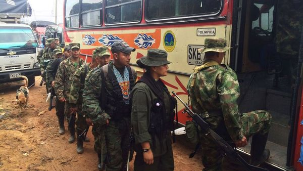Guerrilleros de las FARC desmovilizados (EFE)