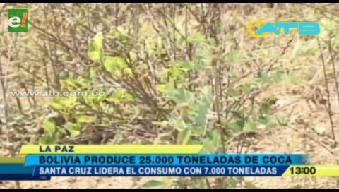 Santa Cruz consume más de 7 mil toneladas de coca
