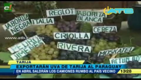 Exportarán uva de Tarija al Paraguay