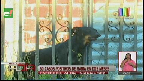 Sedes confirma: Hay alerta por rabia canina en Santa Cruz