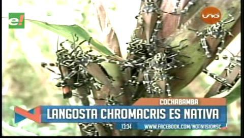 Estudio descarta la presencia de plaga de langostas en los valles cochabambinos