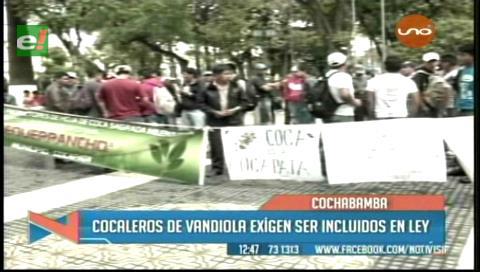 Cocaleros de Vandiola piden ser incluidos en la Ley de Coca