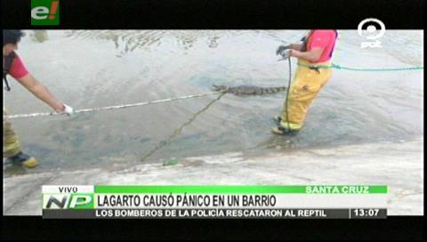 Rescatan a un lagarto en el canal de drenaje del 5to anillo