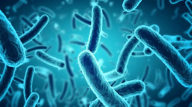 Bacterias dañinas. (iStock)