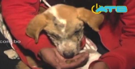 Este cachorro rescatado sufre quemaduras en su rostro. Foto: Captura video ATB