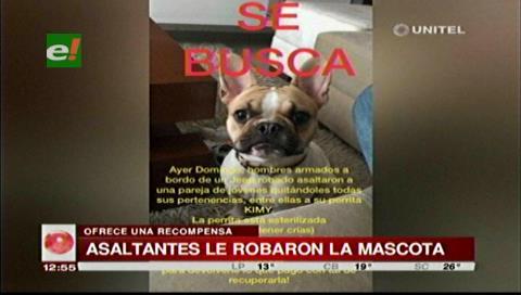 Atracadores se llevaron las pertenencias de una pareja incluida a su mascota