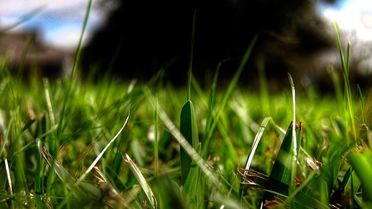Una de las serpientes más mortíferas del mundo se esconde en la hierba: ¿Es capaz de verla?