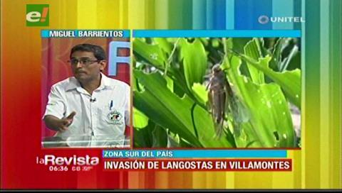 Senasag inicia trabajos para fumigar la plaga de langostas en Villamontes