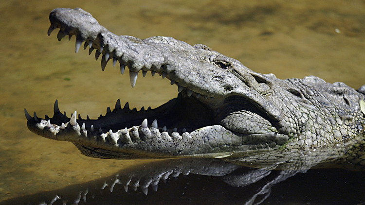 Un cocodrilo mata a un periodista británico mientras se lavaba las manos en una laguna