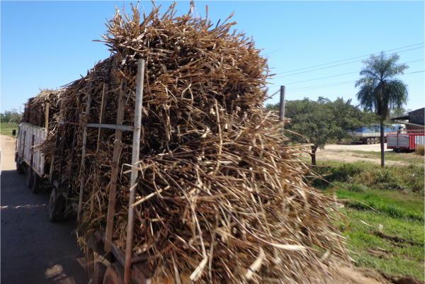 Resultado de imagen de Cañeros de Tarija