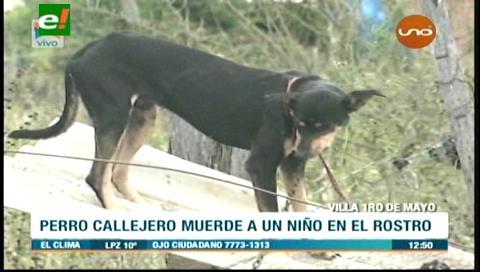 Perro callejero muerde en el rostro a un menor de dos años