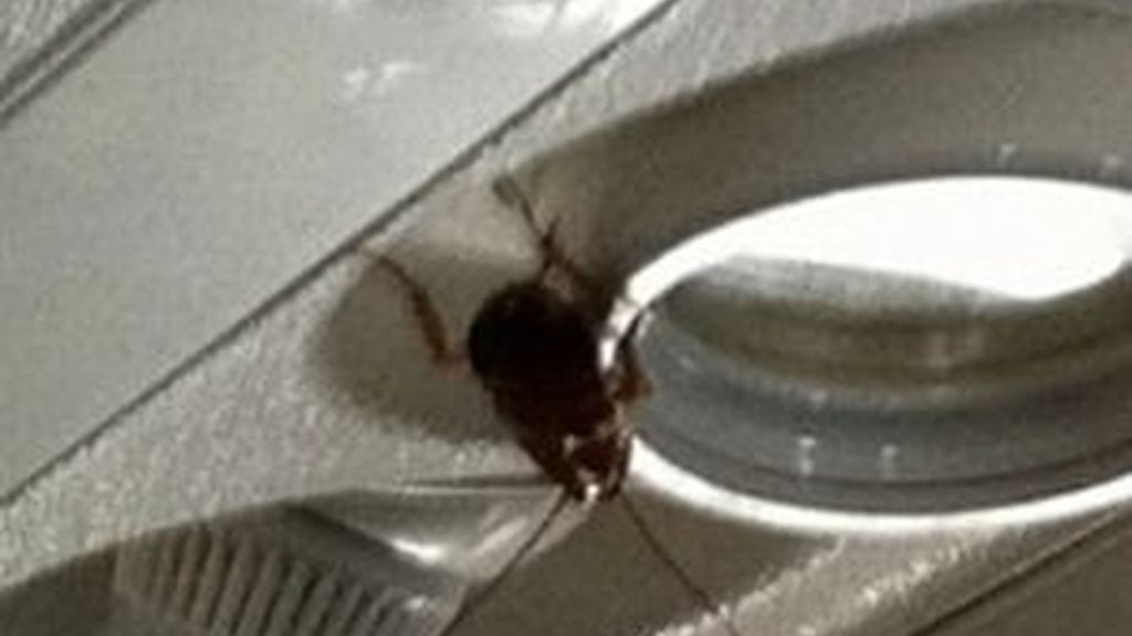 Cucarachas en un avión comercial.