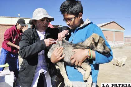Resultado de imagen para vacunación antirrábica en segundo día de aplicación en Oruro