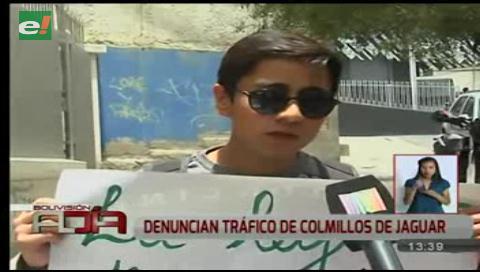 Activistas denuncian tráfico de colmillos de jaguar