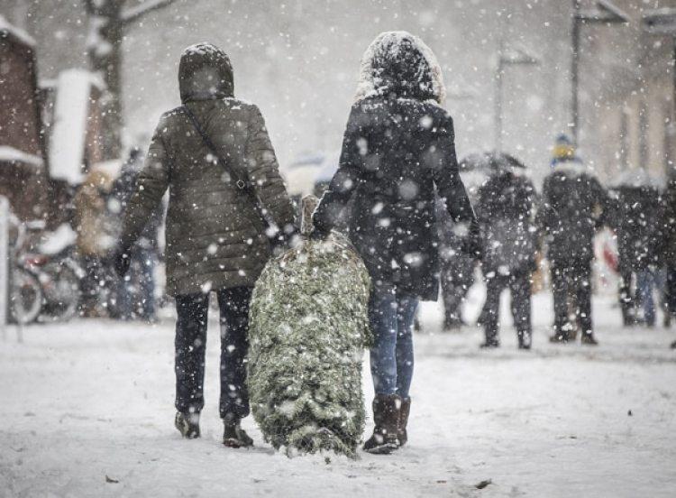 Dos mujeres cargan un árbol de Navidad enFráncfort, Alemana.(AFP)