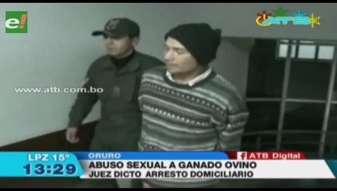 Encarcelan a sujeto que violó a una oveja en Oruro