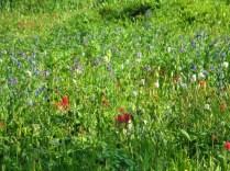 Fox Park wildflowers