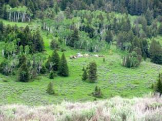 Mile 74: Cow Camp again.